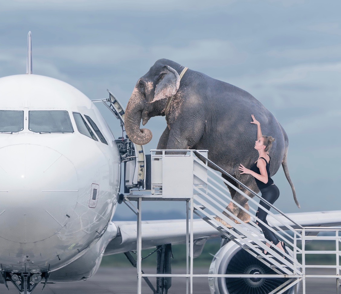 Business Blockaden The Journey Of Your Lifetime 7 Heroes Day Flugzeug